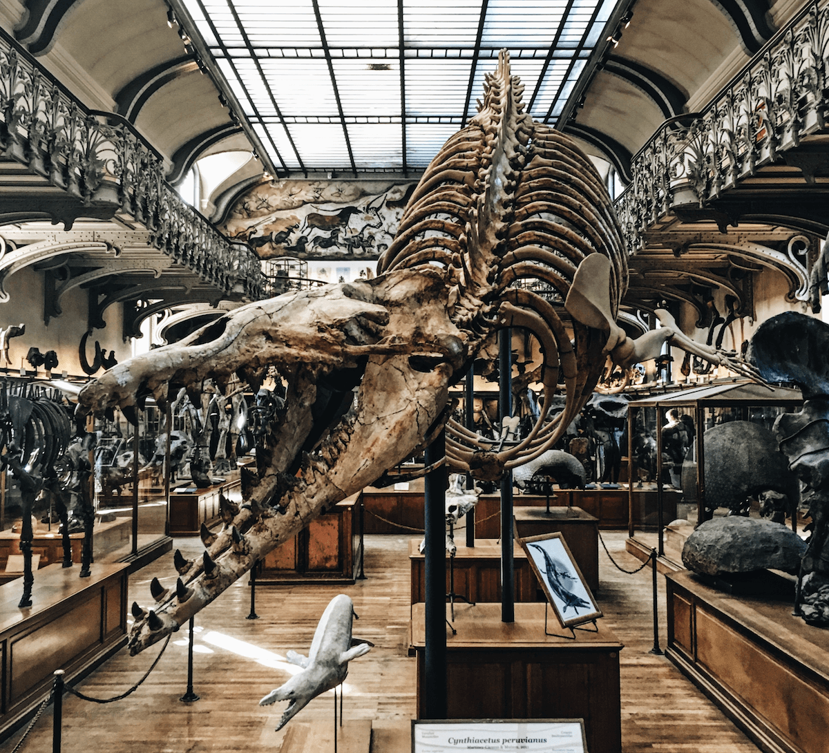 dinosaur_bones_anthony_delanoix.jpg.png