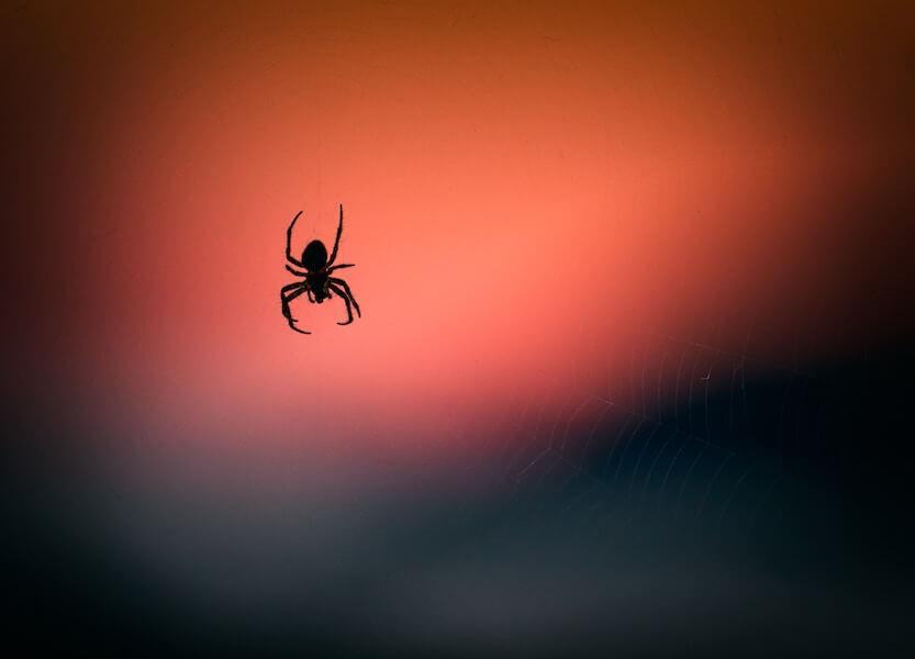 Arachne gene
