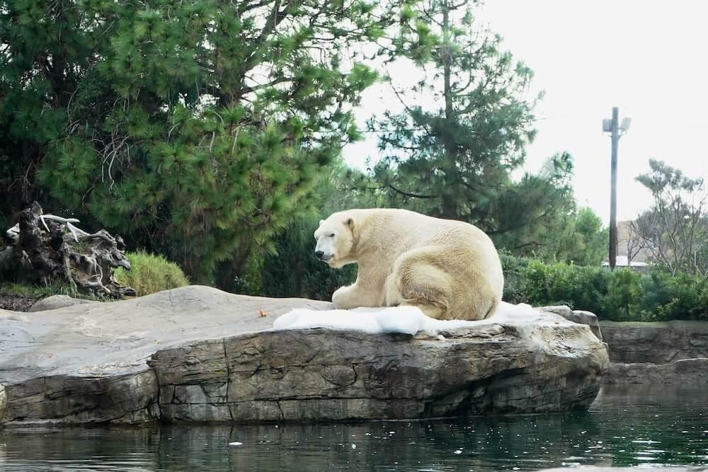 """For the Polar Bear at Joburg Zoo"""