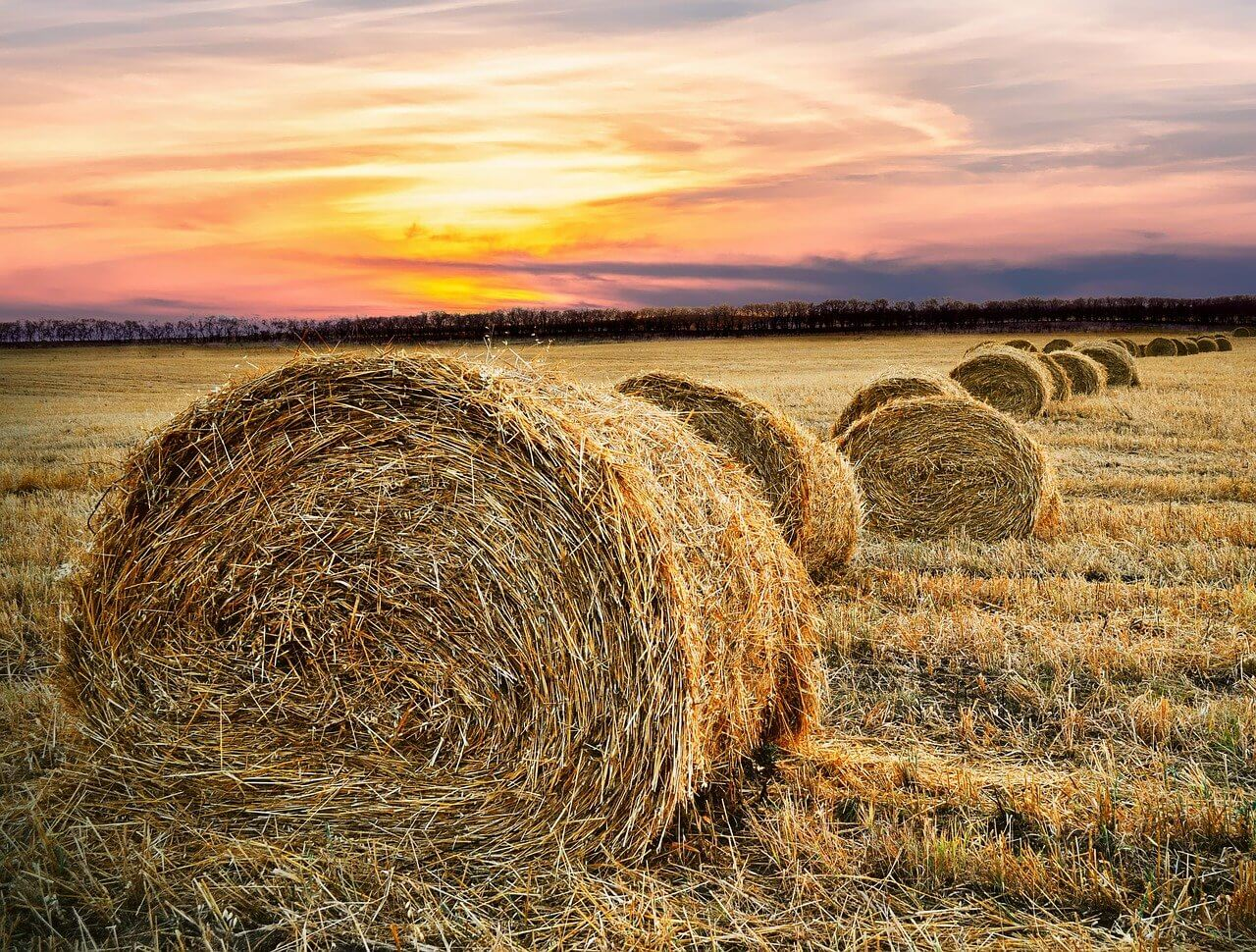 The Hay is in the Barn