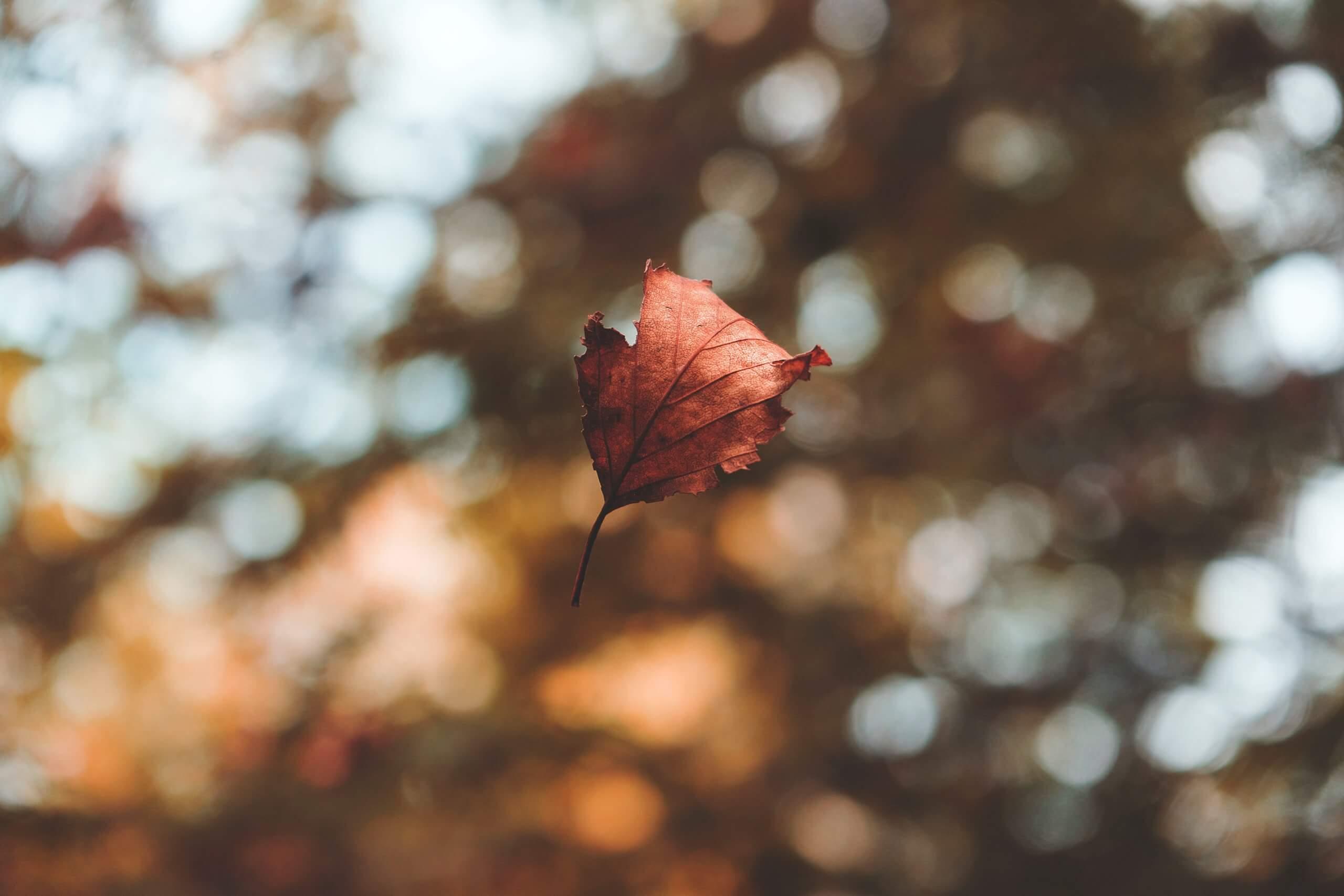 A Leaf Falls
