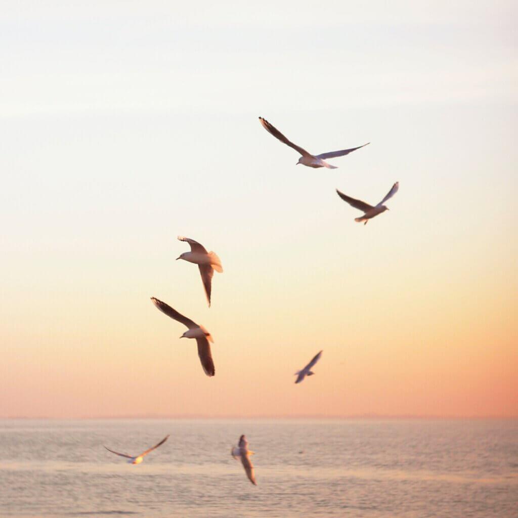 Golden Seagulls